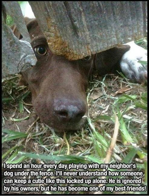Dog under the fence