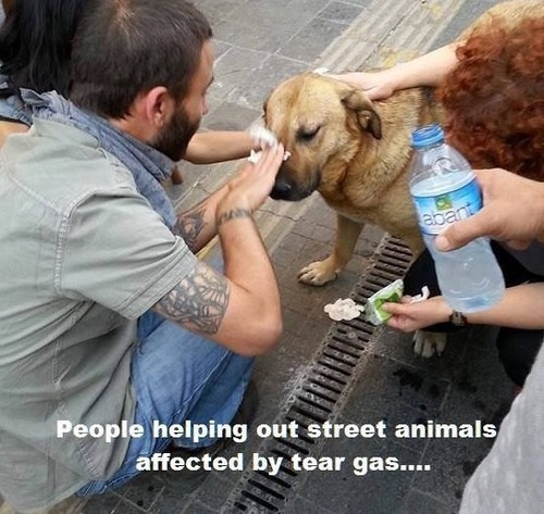 Helping animals affected by teargas