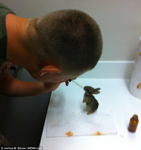 Call the rabbit-response unit! U.S. Marine, Combat medic Joshua Bisnar, nurses orphan bunnies back to health after rescuing them from military barracks.