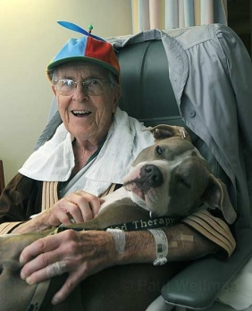 Be still my heart --- Daisy Mae, another former dogfighting dog who cuddles with the elderly and frail, and even allows small children to hold her tight when they are undergoing painful medical procedures.