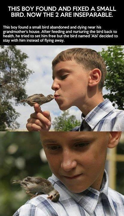 Boy and his little bird
