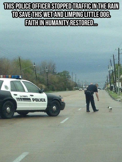 policeman rescues dog on the road
