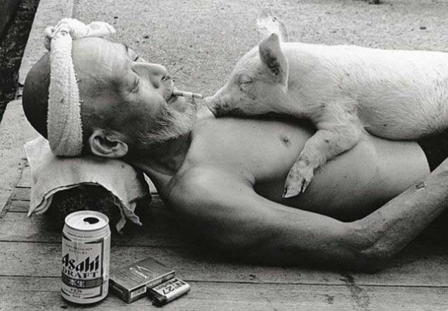 Old Japanese man drinking, smoking and letting a pig sleep on him