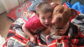 Rescued pit bull rescues 4-year-old boy suffering blood sugar crash Read more: Rescued pit bull rescues MN boy suffering blood sugar crash - KMSP-TV http://www.myfoxtwincities.com/story/23631918/rescued-pit-bull-rescues-4-year-old-amid-blood-sugar-crash#ixzz2hJvc1wxC