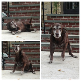 old dog getting up
