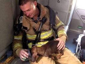 This was taken after a firefighter risked his life to save a puppy from a burning house...