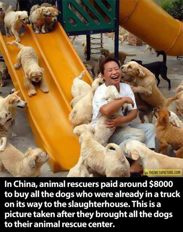 Saved from the pot: Hundreds of dogs rescued by animal activists in China as they are about to be killed for food  Read more: http://www.dailymail.co.uk/news/article-1378738/Hundreds-dogs-set-slaughtered-food-rescued-Chinese-activist