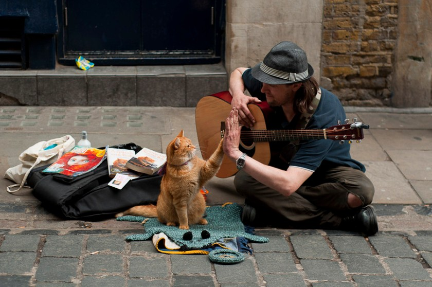 This is James Bowen with his cat Bob