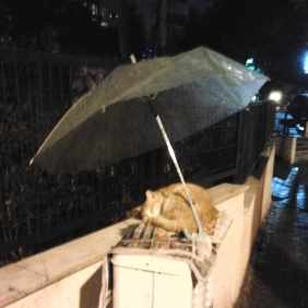 A stranger kept a sleeping kitty dry in a downpour.