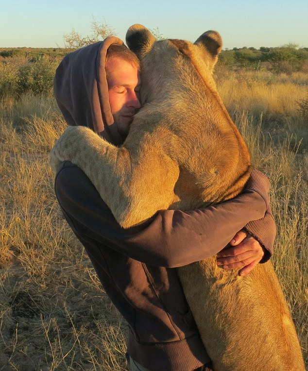 A lioness hugging the man who rescued her