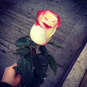 a rose given to a stranger in new york