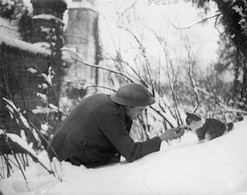 British soldier shaking hands with a kitten in the snow. Neulette, France, 1917.