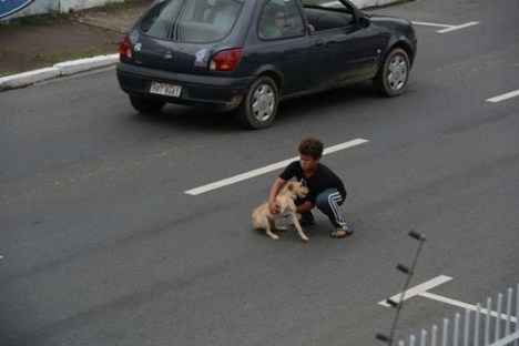 A Boy Helps a Desperate Dog in Need