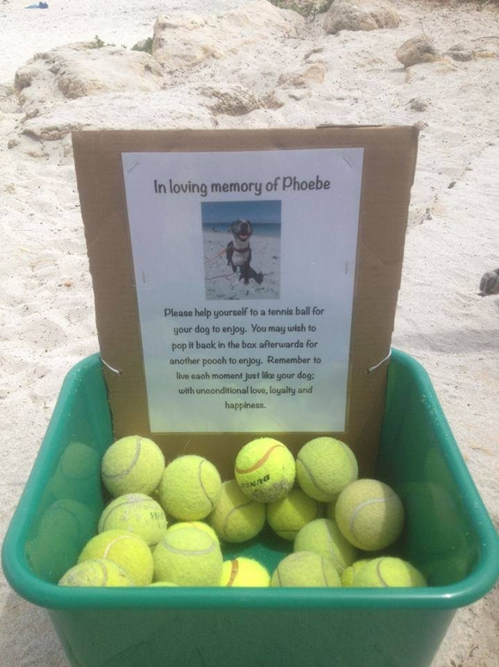 """I found this at my local dog beach today""kindness"