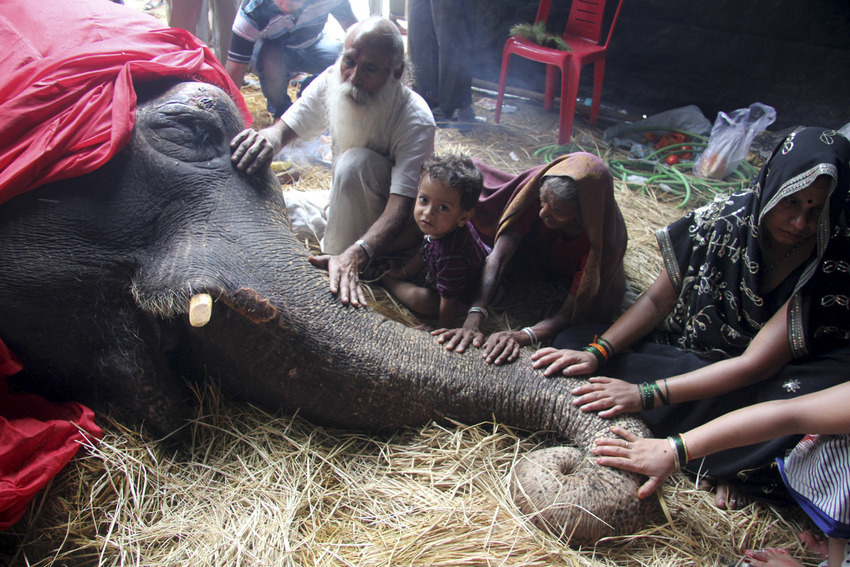 Bijlee, the 58-year-old ailing elephant rescued by individuals and NGOs sometime back, Mumbai, India.
