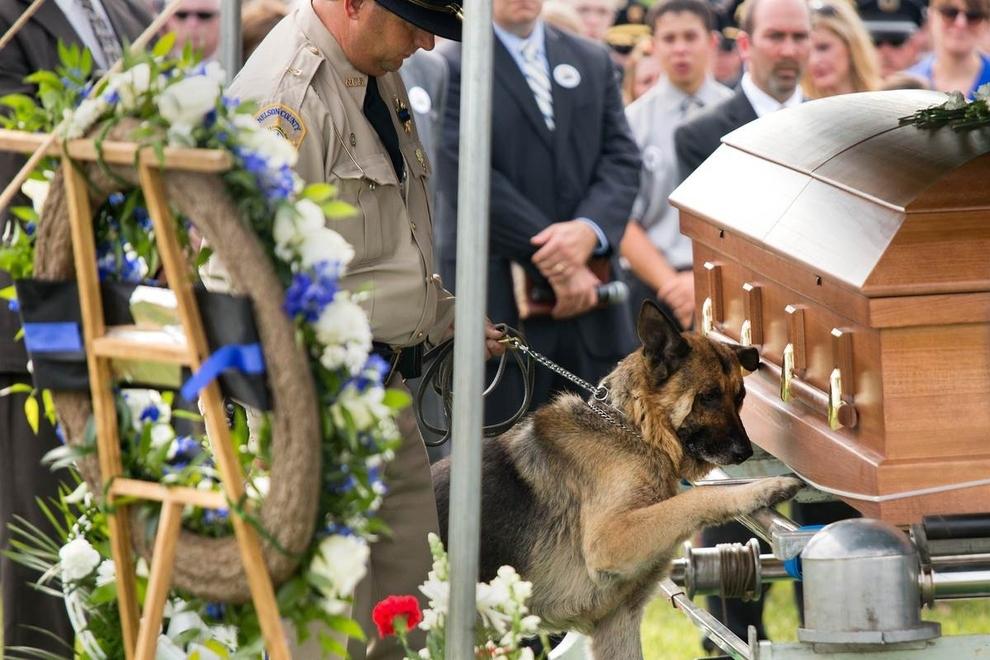 Police Dog Figo Pays Lasts Respects To His Fallen Partner, Officer Jason Ellis