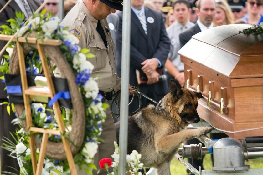 Police Dog Figo Pays Lasts Respects To His Fallen Partner, Officer Jason Ellis