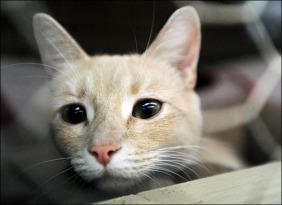 Kittens in Jail