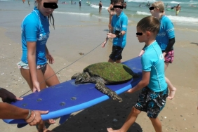 "'9ninety_nine9' wrote: ""My parents run a surf school, today the kids in the lesson found and rescued this sick sea turtle who was getting knocked about."""
