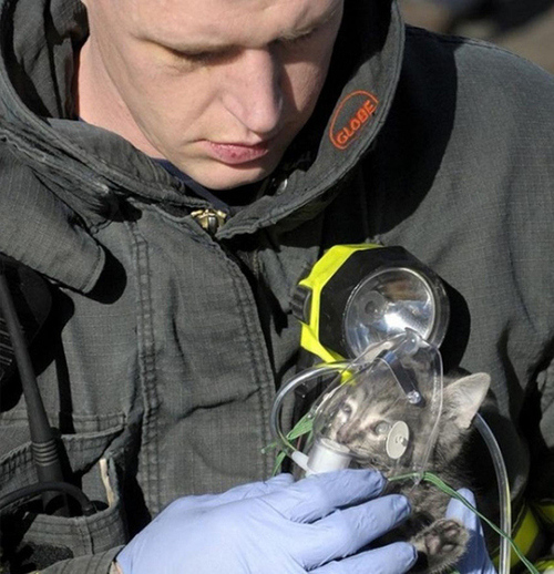 A tiny kitten and a giant firefighter: A recipe for aww.  A firefighter responding to an apartment fire in Fresno discovered a lifeless kitty among the charred rubble. Being the good rescuer he was, he brought the kitten out of the house and begun to give it oxygen. Within about 15 minutes, he was able to bring the kitten back to life. And it was all captured on his helmet cam. Watch the heartwarming video below: