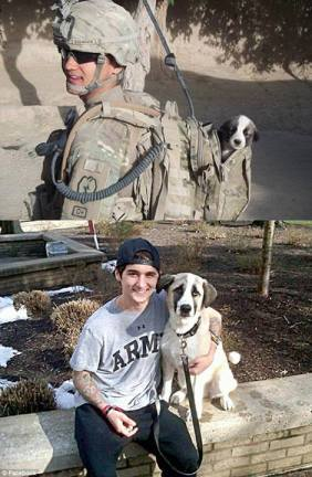 puppy in combat - now and then -
