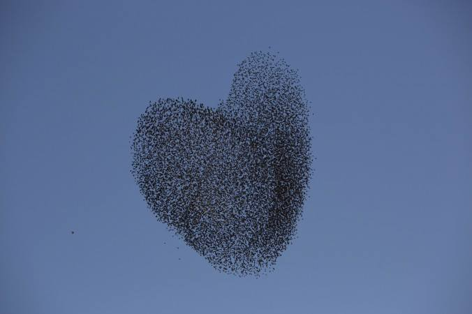 A flock of migrating starlings flies over the southern Israeli village of Tidhar, Wednesday, Feb. 12, 2014