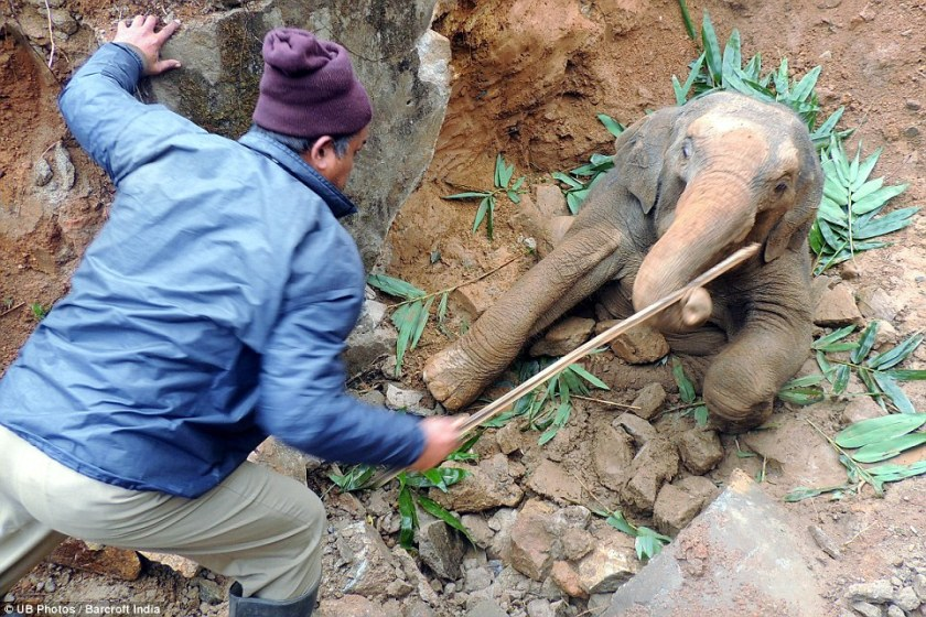 A forest official arrived to help him out of the ditch in Assam, India, as people handed bits of food to the baby