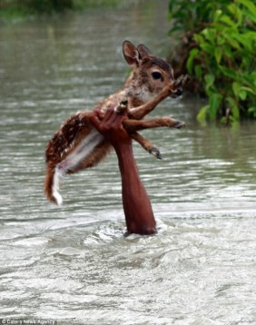 Incredible: A brave boy fearlessly risked his own life to save a helpless baby deer from drowning