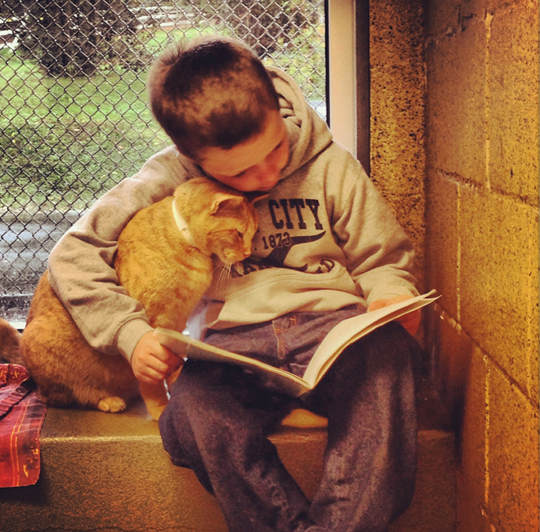 "Children Read To Shelter Cats In The Heart-melting ""Book Buddies"" Program"