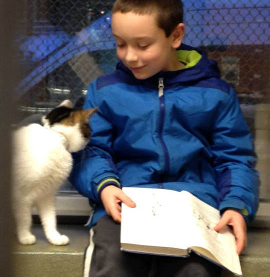 Children Read To Shelter Cats To Soothe Them1