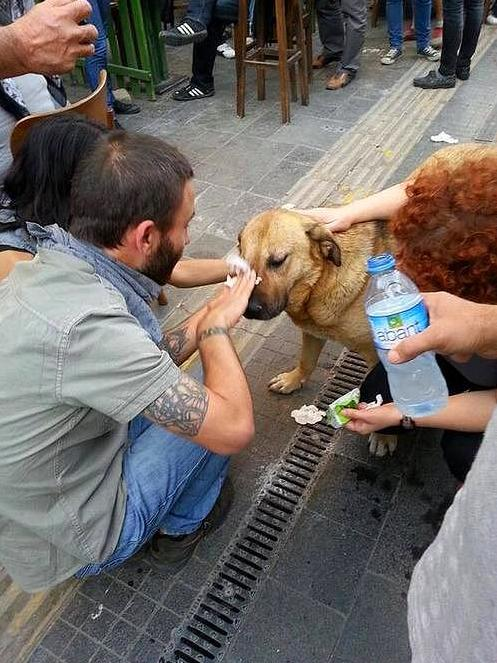 Protesters help a dog affected by tear gas [Istanbul, Turkey, 2013]