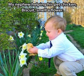 little boy help a duckling smell a flower