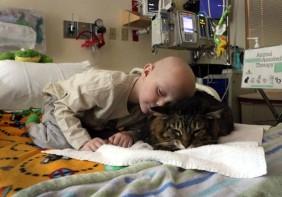 Meet Huck Finn the therapy cat.