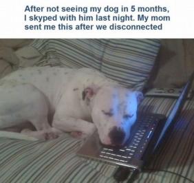dog sleeping on a keyboard