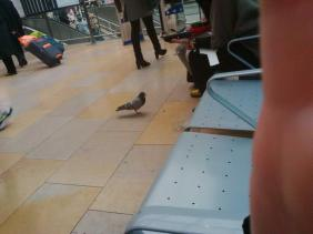 Small moments of kindness should never go unnoticed, these two young ppl are gently feeding a lame pigeon...