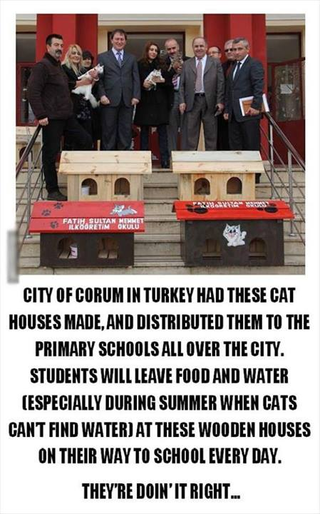 free houses for cats in turkey
