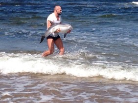 MMA Fighter Rescues a Baby Dolphin on his day off.