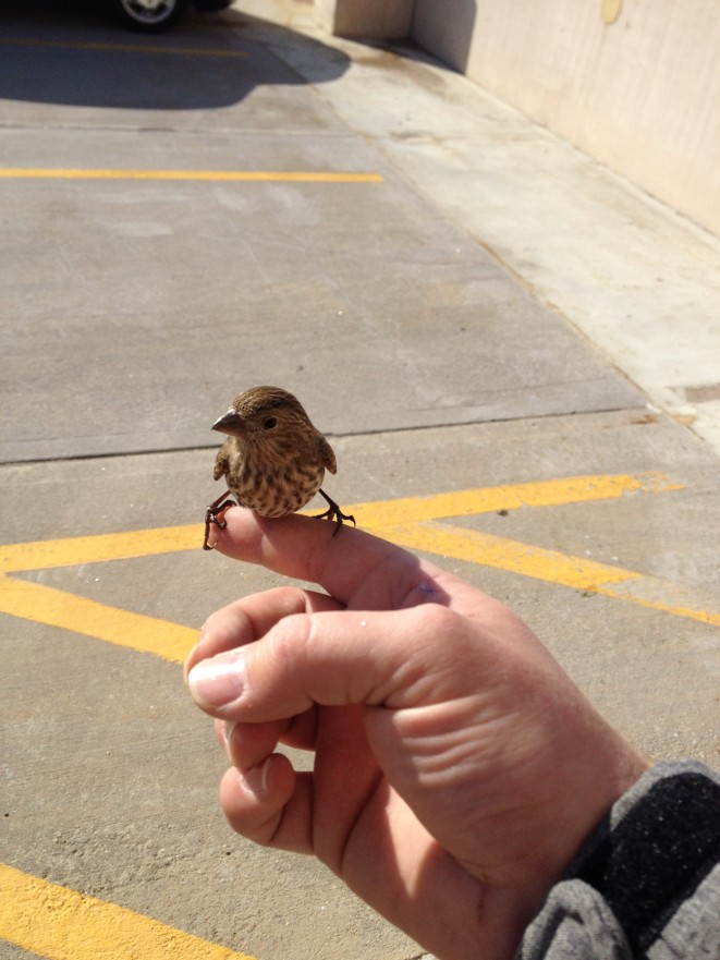 rescued birdie
