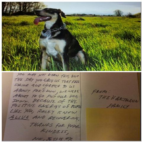 kindness saves a dog