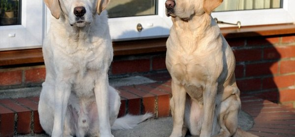 Best buddies: The Waspes say the two dogs have got on fine since they came together, with Opal taking Edward to all his old haunts