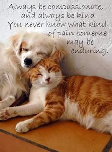 Choose Kindness Over Judgement