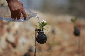 West Bank garden of tear gas grenades