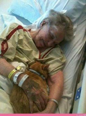 """A hospital allowed this lady's cat to visit her before she died."""