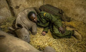keeper at a rhino conservatory in Africa