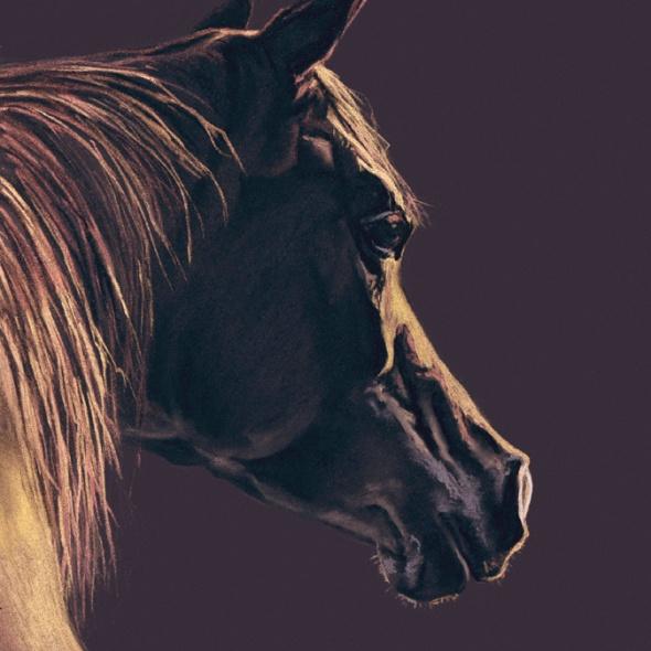 horse kindness