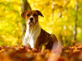 Dog-dogs-32691594-1600-1200