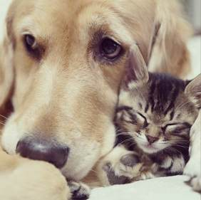 This Kitten's Mom Rejected Her. What Happened After She met This Golden Retriever Stole My Heart.