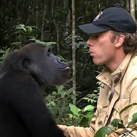 Gorilla Reunites With The Man Who Raised Him
