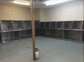 North Texas dog shelter emptied after free adoption day