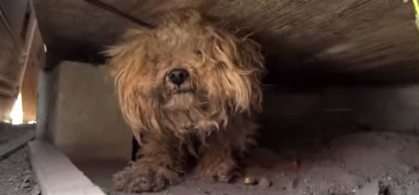 woody When the dog's owner died, he was left behind. Watch what happens next!